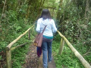 Cajas Walking Jungle